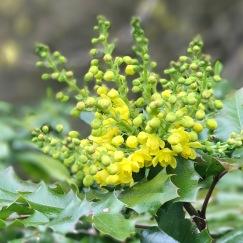 YellowFlowerCluster